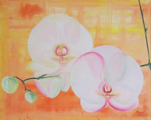 Orchidee für Gisela