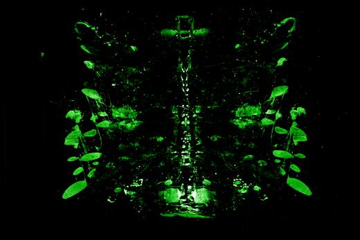 Rorschach - Fluoreszenz