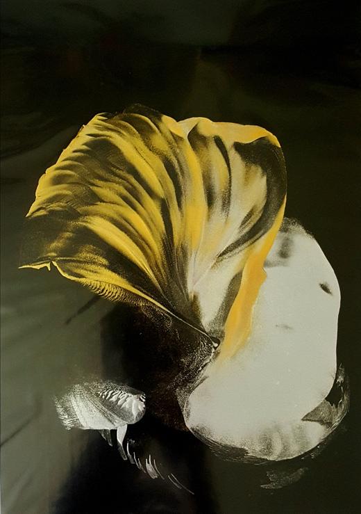 Muschel 2